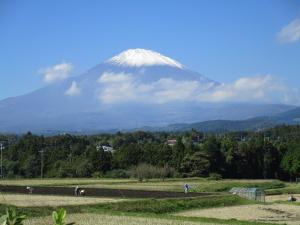 富士山初冠雪と菜撒き
